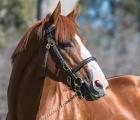 Justify-stallion-of-Coolmore-Australia-april-2020