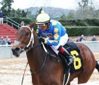 Gold-Street-wires-smarty-jones-at-muddy-oaklawn-usa