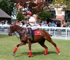 Polo horse .Iniziano le competizioni il 2 febbraio 2020