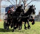 Cavalli a Roma attacchi