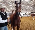 cavalli-a-roma_horse-friendly-arena_vignali