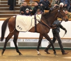 creationist-will-be-a-work-companion-for-romanised-tattersalls