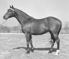 keeneland-library-meadors-collection-1948-03-05-count-fleet-conformation-(mr prospector grand father)at-stoner-creek
