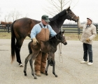 Serenas Song with first foal