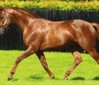Australia, Coolmore stallion 2020