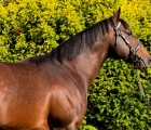 Shamardal, Darley Stallion died the 16th of April 2020