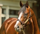 Union Rags, top Stallion Northern Emisphere april 2020 USA