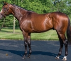 stallion-Constitution-Tiz-The-Law-father-26-03-2020
