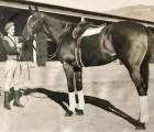 This is a 1939 photo of Sidney Carton who was by Blue Larkspur out of Mea Culpa by St. Germans. He was owned and bred by John Hay Whitney. While he did little on the track or in the breeding shed, his claim to fame is th