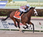 Tiz-The-Law-winner-of-the-curlin-florida-derby-2020-28-marzo-gulfstream-park-florida