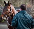 make believe stallion ballylinch (UK)
