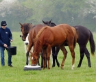 Pat Smullen and yearlings, Newmarket 27 05 2020