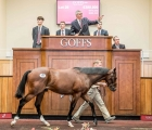 the-goffs-uk-sales-complex-at-doncaster-21-08-2020