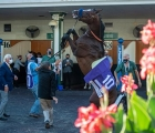 thousand-words-rears-in-the-paddock-before-the-kentucky-derby-usa-06-09-2020