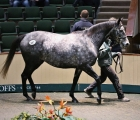 snowflakes-the-galileo-own-sister-to-winter-sells-for 525.000 $