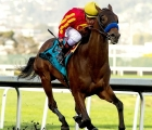 Azul-coast-who-took-to-the-synthetic-track-at-golden-gate-fields-usa-19-02-2020