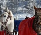 Due-polo-horse-di-cortina-2020-20-febbraio