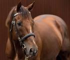 In ricordo di Casamento thoroughbred stallion (r.i.p. 22-02-2020)