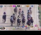 herald-business-cup-at-seoul-racecourse-on-sunday-cheongdam-dokki-kra