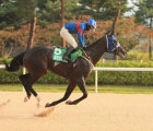 save-the-world-enters-the-kra-cup-mile-as-a-leading-contender-5-luglio-korea