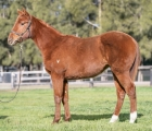 lot-1001-whippy-van-x-all-too-hard-filly-aus-24-luglio-vinery-stud