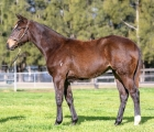 lot-1064-confident-x-more-than-ready-filly-aus-24-luglio-vinery-stud