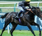 english-king-coolmore-prospect-in-june-2020_0