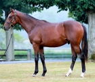 galileo-son-of-prudenzia-lights-up-deauville-arqana-fra-10-09-2020