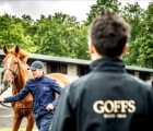 Goffs Orby and Sportsman's Sales, Doncaster, 19 09 2020, UK