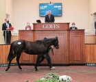 Rockfield Farm provided the top lot of the day's trade with their son of Footstepsinthesand (Lot 647 - pictured), Goffs UK, 25 09 2020