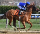 Australia-lake-avenue-dominant-victory-g2-demoiselle-stakes-on-dirt-at-aqueduct-usa-on-saturday-7-december