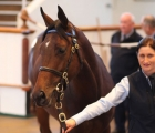 lot-148-a-colt-by-dubawi-ire-topped-the-tattersalls-october-yearling-sale-book-1-at-3-6-million-gns