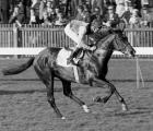 Nijinsky, stallone capostipite