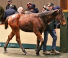 superb-year-for-goffs-national-hunt-ends-with-vibrant-december-sale-2