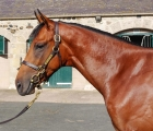 dubawi-cushion-dubawi-colt-is-new-tattersalls-topper-at-2-1-million-gns-06-10-2020