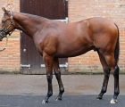 lot-174-kingman-colt-to-top-of-tattersalls-leaderboard-at-2-7-million-gns-06-10-2020