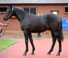 lot-225-another-seven-figure-dubawi-colt-for-godolphin-06-10-2020