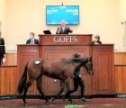 Lot 253 – Sea The Stars filly ex Love Magic, ORBY SALE, UK, 02 10 2020