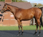 lot-436-galileo-filly-out-of-shastye-lights-up-tattersalls-at-3-4-million-gns-08-10-2020