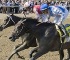 midnight-bisou-retired-according-to-jeffrey-bloom-co-owner-and-managing-partner-or-bloom-racing-stable-usa-02-10-2020