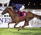 Seconda-vittoria-per-il-jockey Maniezzi-in Qatar-in-sella-a Dominus