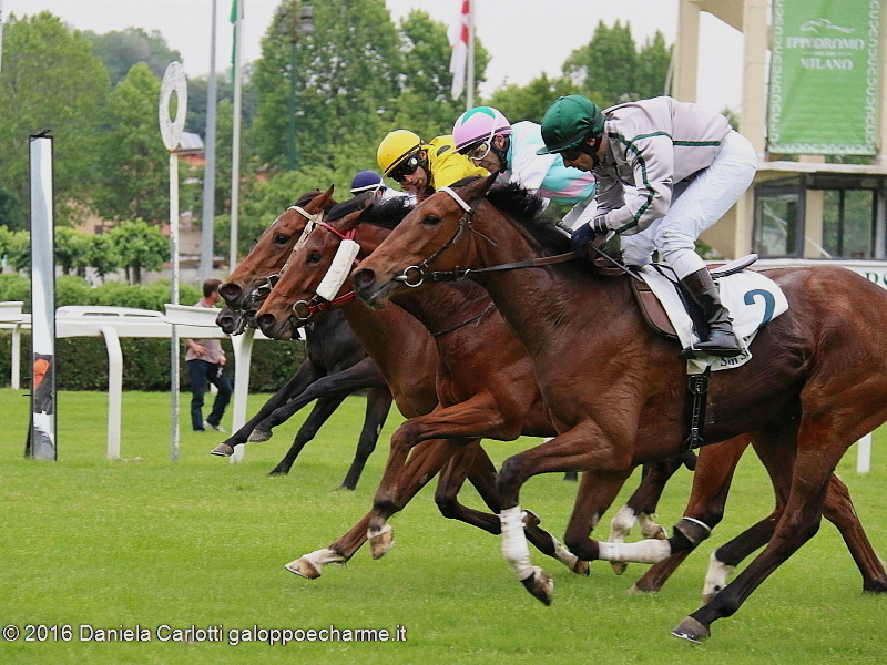 Arrivo in fotofinish: in primo piano High School vince il Premio Vergano, in lotta davanti a Top Of Esteem secondo in giubba gialla ed Artorius terzo con cap verderosa