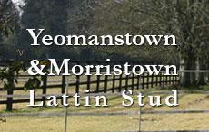 Yeomanstown