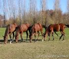 Yearling presso l'azienda agricola Razza Ticino